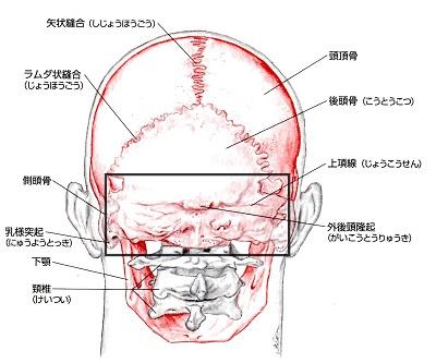 後頭部の頭痛