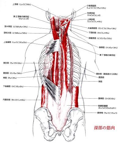 深部の筋肉