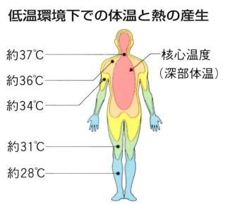 体温調整のしくみ(低温環境下での体温と熱の産生)