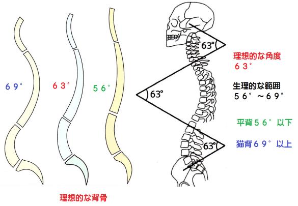 脊柱の弯曲範囲