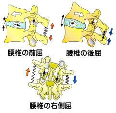 腰椎の関節の動き