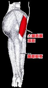 ふくらはぎ・太ももの外側を硬くする大腿筋膜張筋と腸脛靭帯の緊張