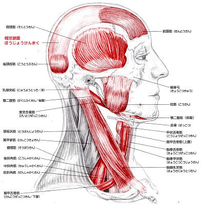 埼玉県川越市の頭痛・肩こり専門マッサージ整体院「いぶきカイロプラクティック」脳脊髄液の流れが悪いと眼圧を高める