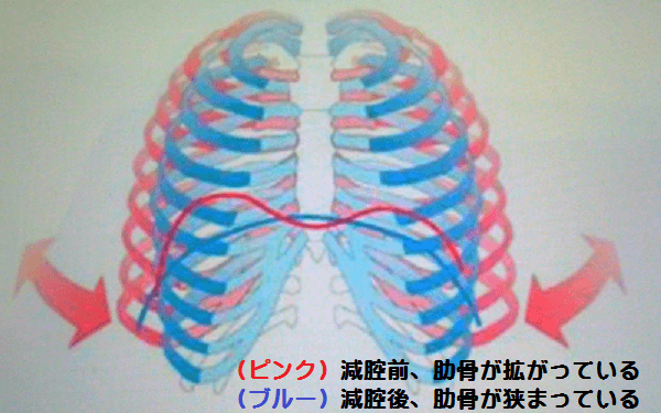 4DS理論(拡がった胸郭と狭まった胸郭)