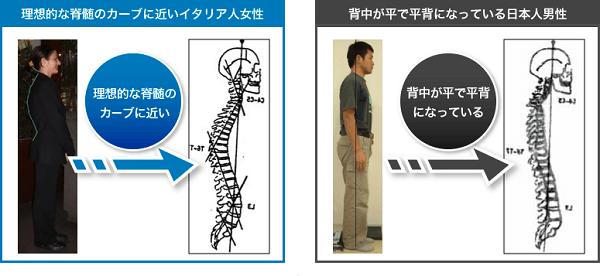 4DS理論(理想的なカーブのある姿勢と背中が平らな姿勢)